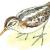 Гаршнеп —  Lymnocryptes minimus