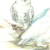 Сова белая — Nyctea scandiaca