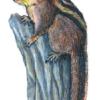 Бурундук сибирский — Tamias sibiricus