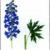 Живокость клиновидная — Delphinium cuneatum