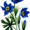 Началась работа над томом «Красная книга Чувашской Республики. Растения. Грибы»
